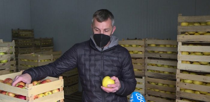 Info – Uzgajivac jabuka iz Jagodine (TV KCN 18.01.2021)